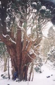 芦生の森にて